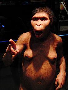Lucy_Australopithecus_Restoration_model