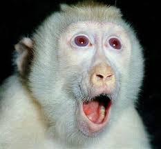 albinos6