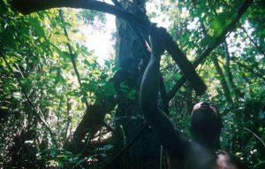 pygmes-26_article_column