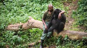RDC: le parc national des Virunga rouvert aux touristes — La Libre Afrique